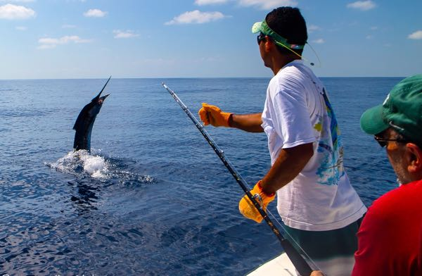 Quepos Sail Fish Charter
