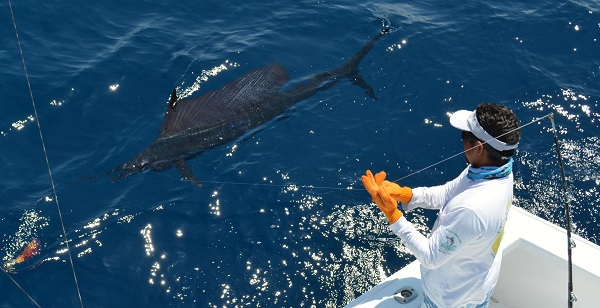 Quepos Fishing sailfish