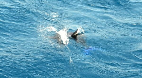 Quepos Flyfish Fishing
