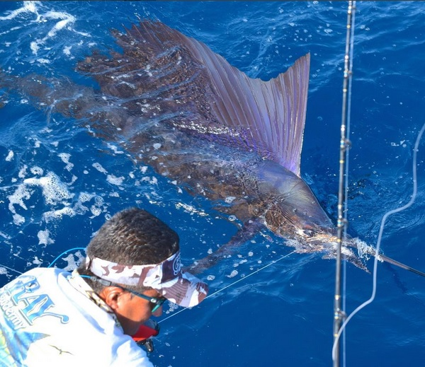 Quepos Fishing Pacific Sailfish Charter