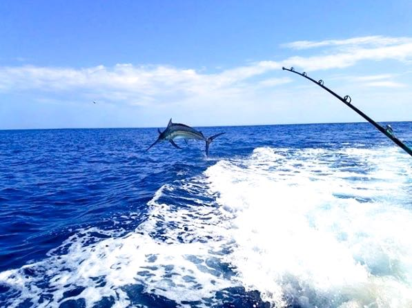 Quepos Marina Pez Vela Fishing Blue Marlin Charter
