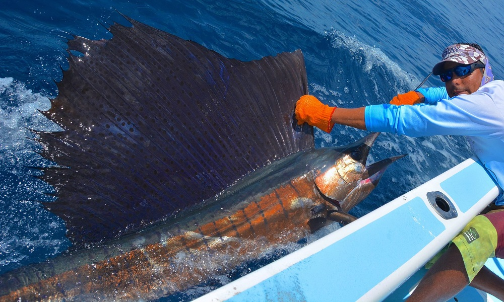 Quepos Offshore Fishing Charter Sailfish Manuel Antonio Costa Rica