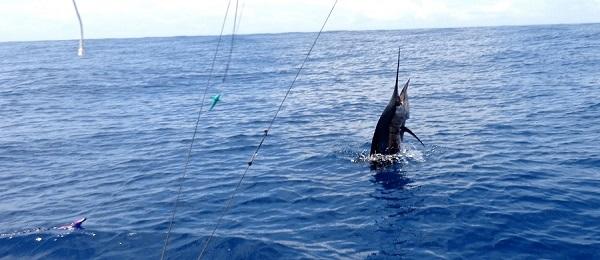 Quepos Fishing Sailflish