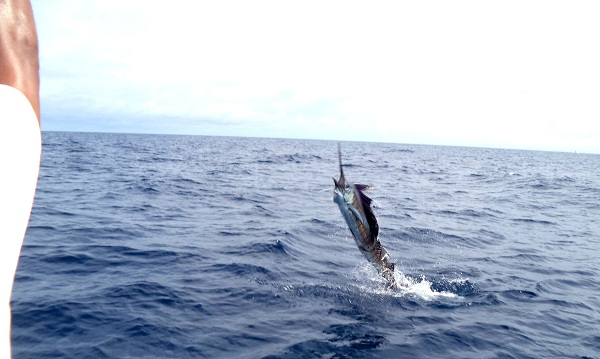 Quepos Costa Rica Fishing Sailfish