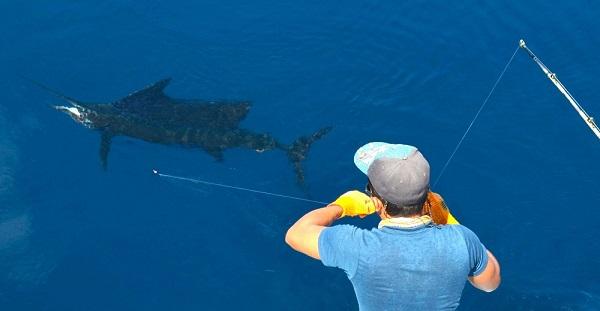 Quepos Fishing Blue Water