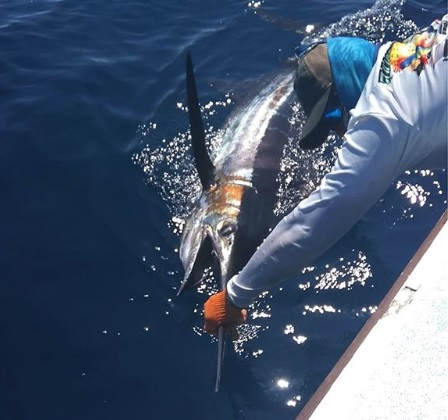 Quepos Fishing Blue Marlin