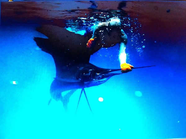 Quepos Costa Rica Fishing Sailfish