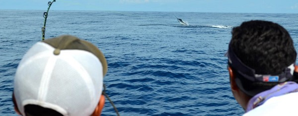 Quepos May Recent Report Fishing Sailfish