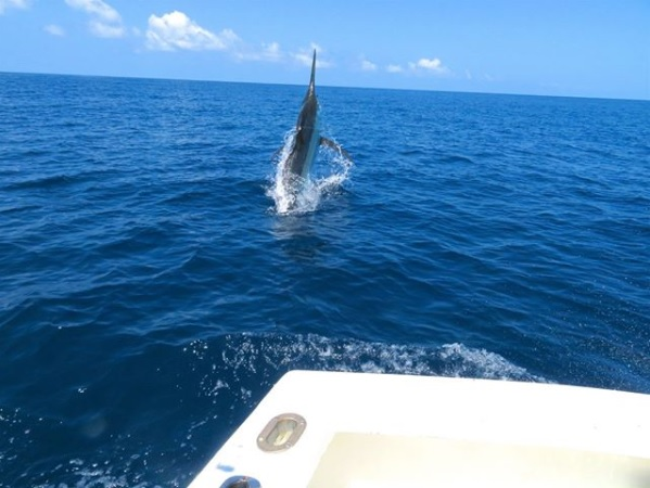 Quepos Fishing Black Marlin July 2018 report