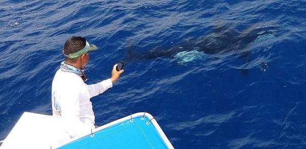 Costa Rica Orca