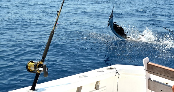 Quepos Sailfish Fishing