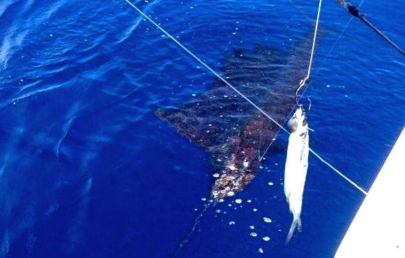 Quepos sailfish fish Fishing