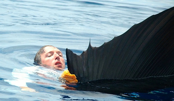 Quepos Swimming with sailfish Fishing