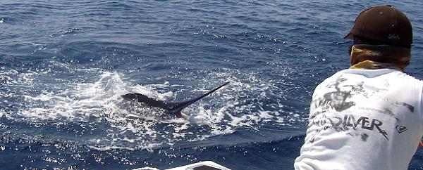 Costa Rica Marlin fishing