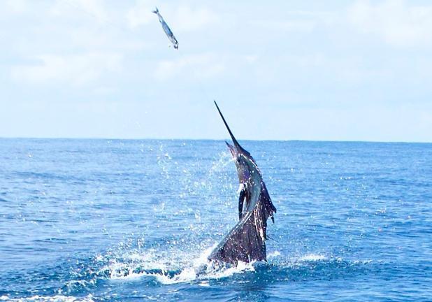 Quepos Costa Rica Fishing family
