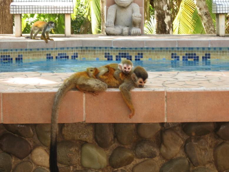 Costa Rica I Monkey